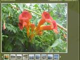 Web2.0 фото-скроллер для просмотра фотографий на вашем сайте визитке